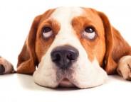 Ein Hund als Seelentröster
